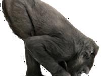Gorilí sklo