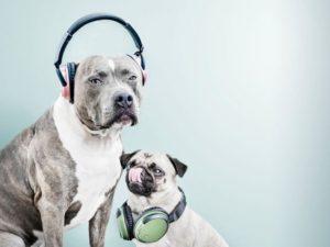 Dvojice nových sluchátek Trust míří na český trh